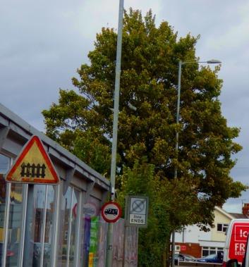 Tree, Baltika