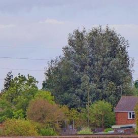 Tree, BD