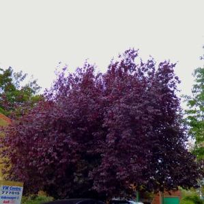 Tree, Blackfriars Street