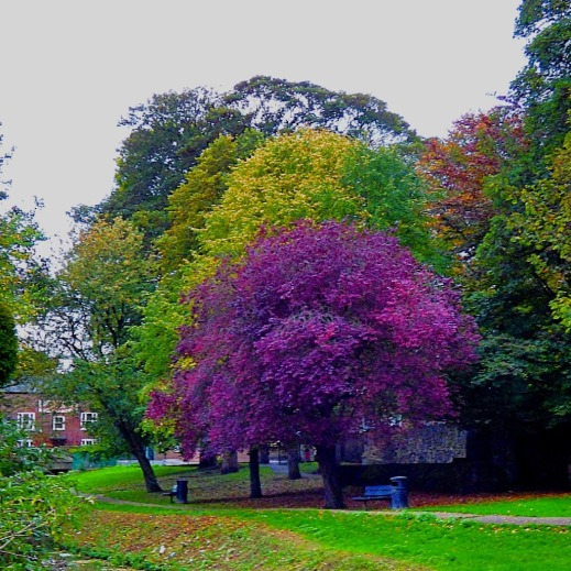 Tree contrasts, Kettlewell Lane