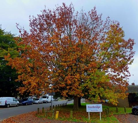 Tree, Freebridge Housing