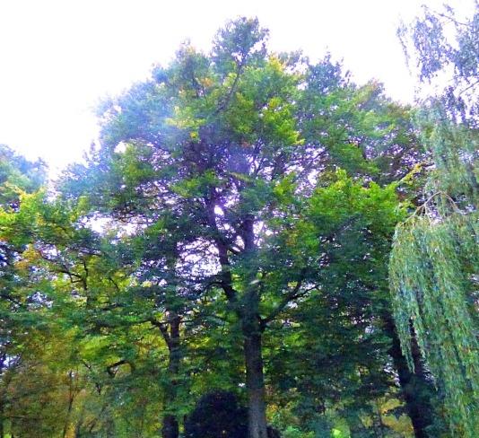 tree, heading towards seven sisters