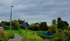 Tree horizon, Bawsey Drain