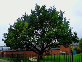 tree, hospital walk