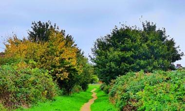tree, HP path