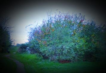 Tree, HP