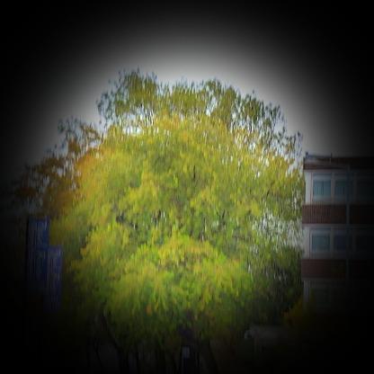 Tree, John Kennedy Road