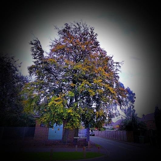 Tree near Aldi
