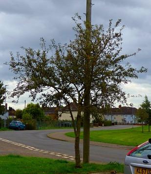 Tree near allotments