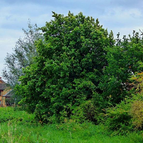 tree, near field