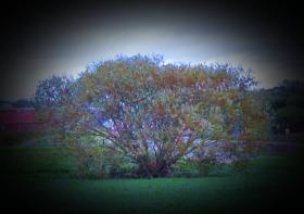 Tree, near Millfleet