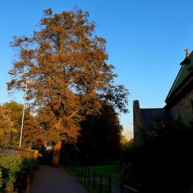 Tree, near St John the Evangelist
