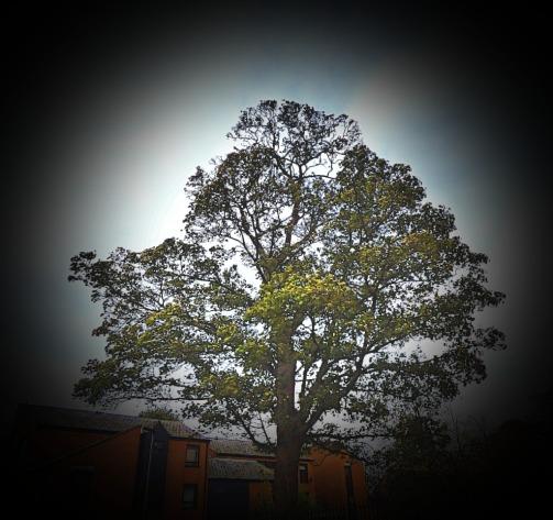 Tree near St Nicks