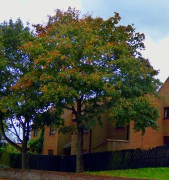Tree near Trues Yard