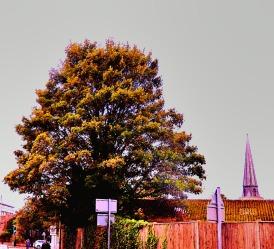 Tree, nr Baltika