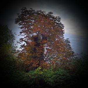 Tree, off SRP