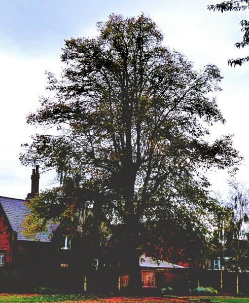 Tree, peace garden