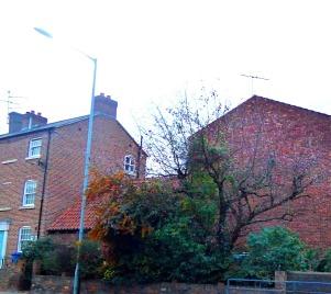 Tree, South Street