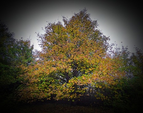 Tree, SRP