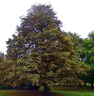 Tree, St John's Walk