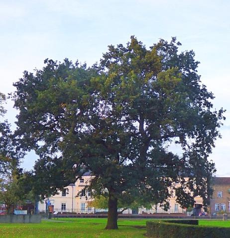 Tree, the walks