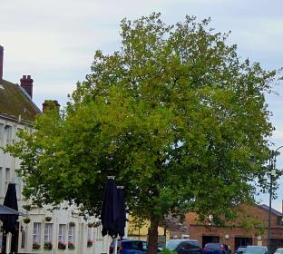Tree, TMP