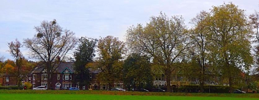 Tree Wall 2