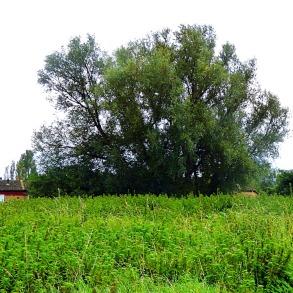 Tree - wasteland