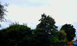 Trees, 2nd duckpond II