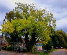 Trees, 2nd duckpond