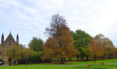 Trees and St John The Evangelist
