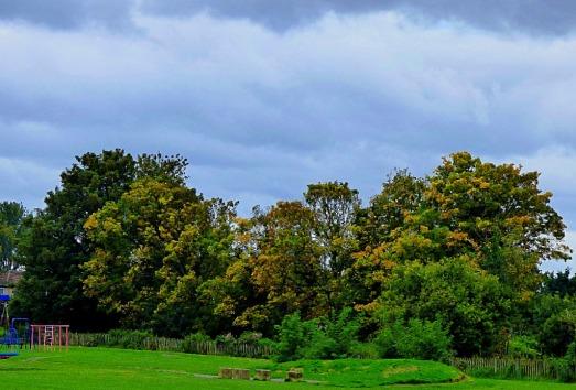 trees behind rec park
