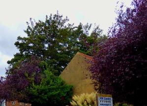 Trees, Blackfriars Street