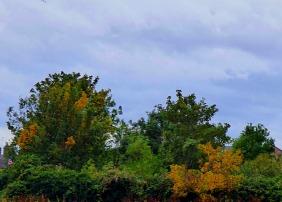 trees bordering rec park