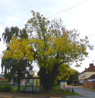 Trees, Edma Street