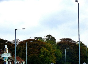trees, from South Gate roundabout