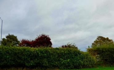 Trees, Gaywood