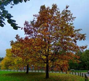 trees in autumn foliage
