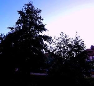 Trees in half-light