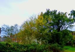 Trees, Kettlewell Lane II