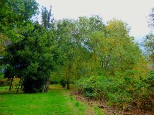 Trees, Kettlewell Lane III