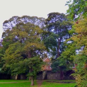 Trees, Kettlewell Lane IV