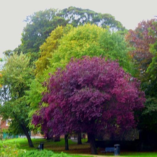 Trees, Kettlewell Lane V