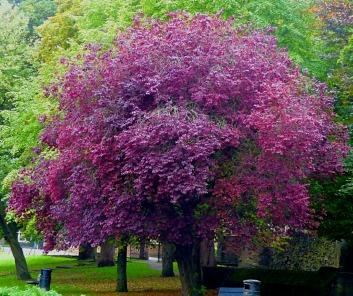 Trees, Kettlewell Lane VI
