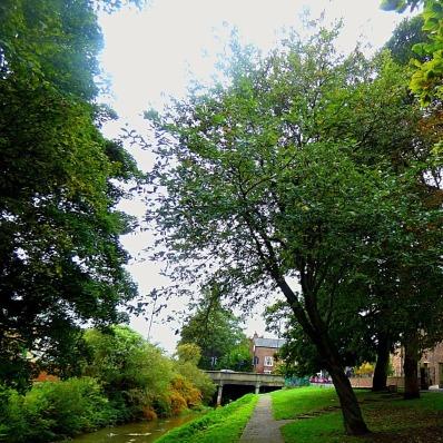 Trees, Kettlewell Lane VIII