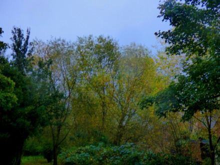 Trees, KL