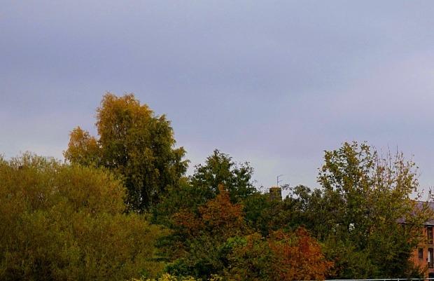 Trees, Millfleet
