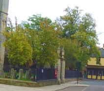Trees, Minster