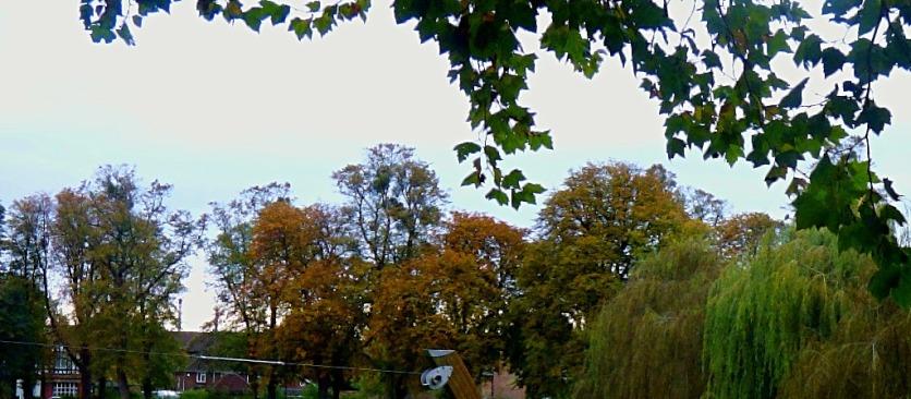 trees, near and far