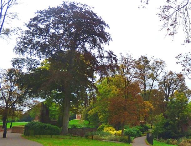 Trees, near Broadwalk
